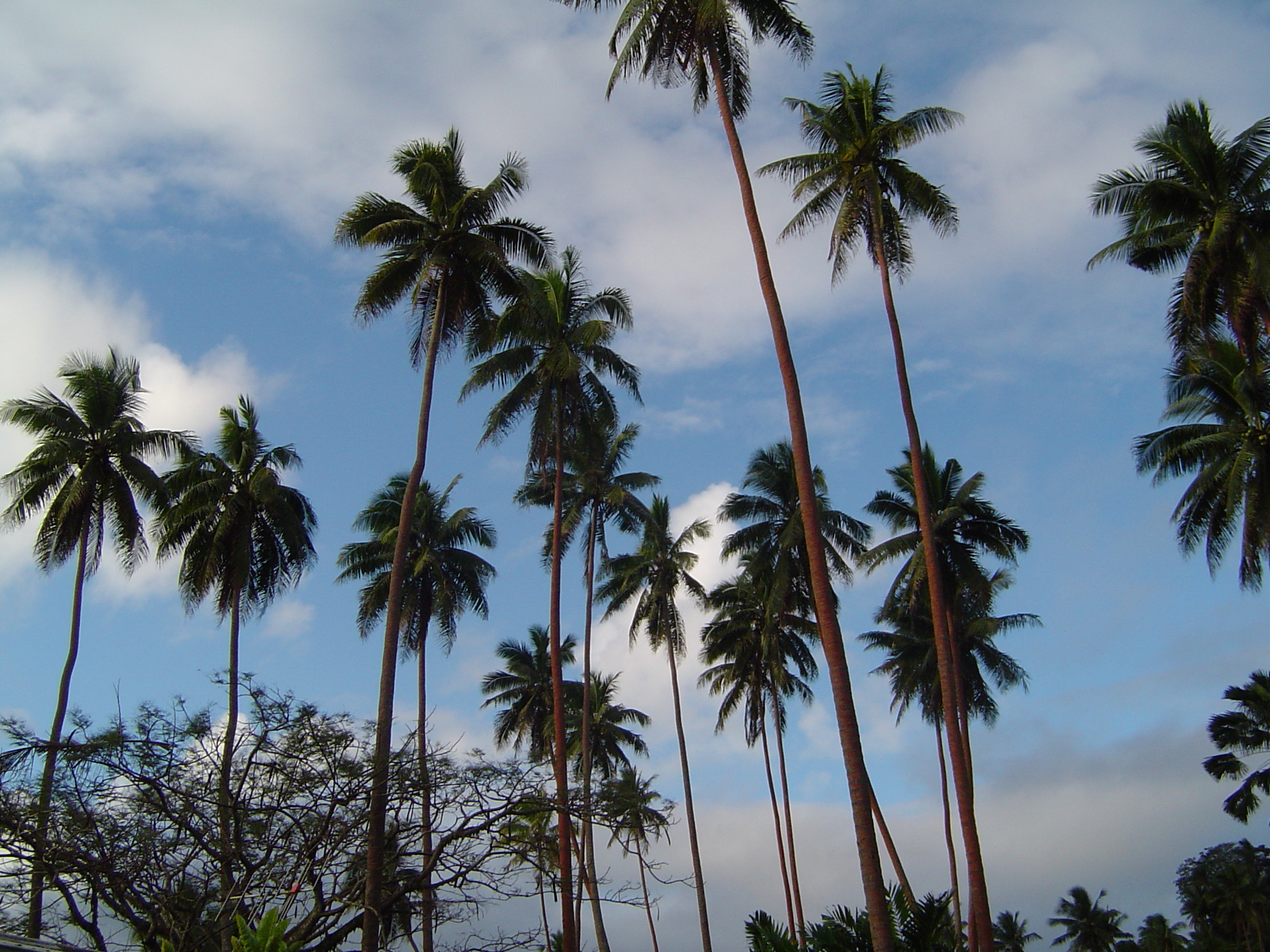 savusavu palms